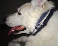 Scoopshot: Pets & Sports II
