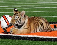 Ohio wants more information about Massillon Washington High's live tiger mascot tradition