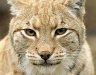 Bobcats outslug Panthers, 18-12