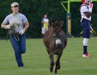 Live burros give Hillsboro football games a kick-start