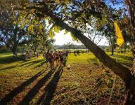 Monticello terrain shines in Aucilla Warrior XC Stampede