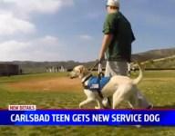 SoCal baseball team adopts autistic teen's dog as mascot