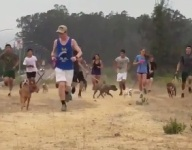 VIDEO: California HS cross country team practices with shelter dogs