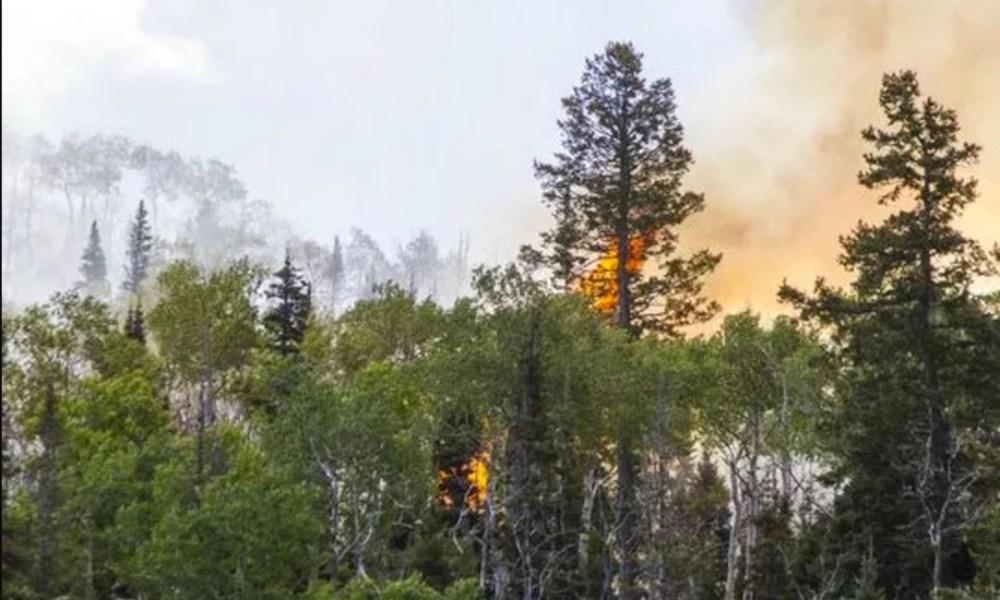 The Brian Head Fire (Photo: St. George Spectrum)