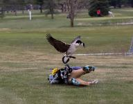 A goose attacked a Michigan high school golfer and took him out!