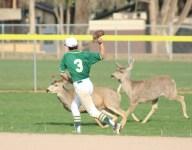 Deer diary: Animals postpone baseball game in Colorado